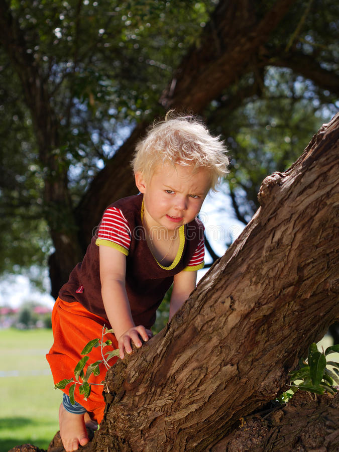 Boy climbing a tree stock photos