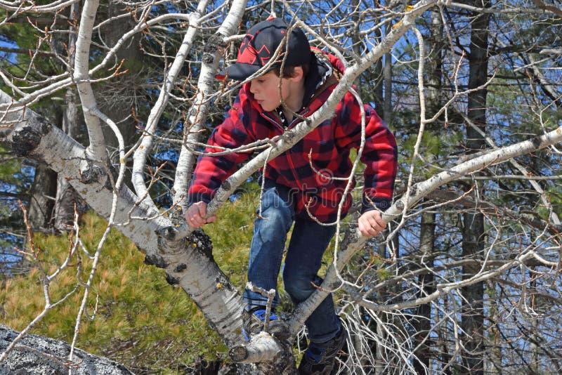 Boy climbing tree stock photography