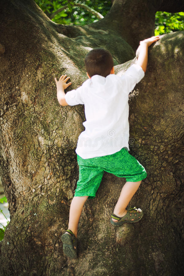 Boy climbing on tree stock photo