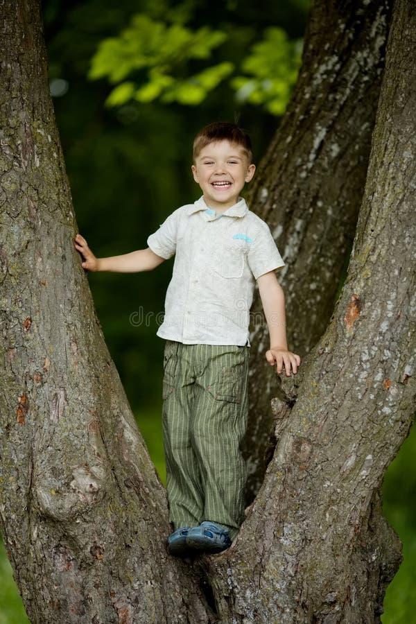 Boy climbs big tree in park stock photography