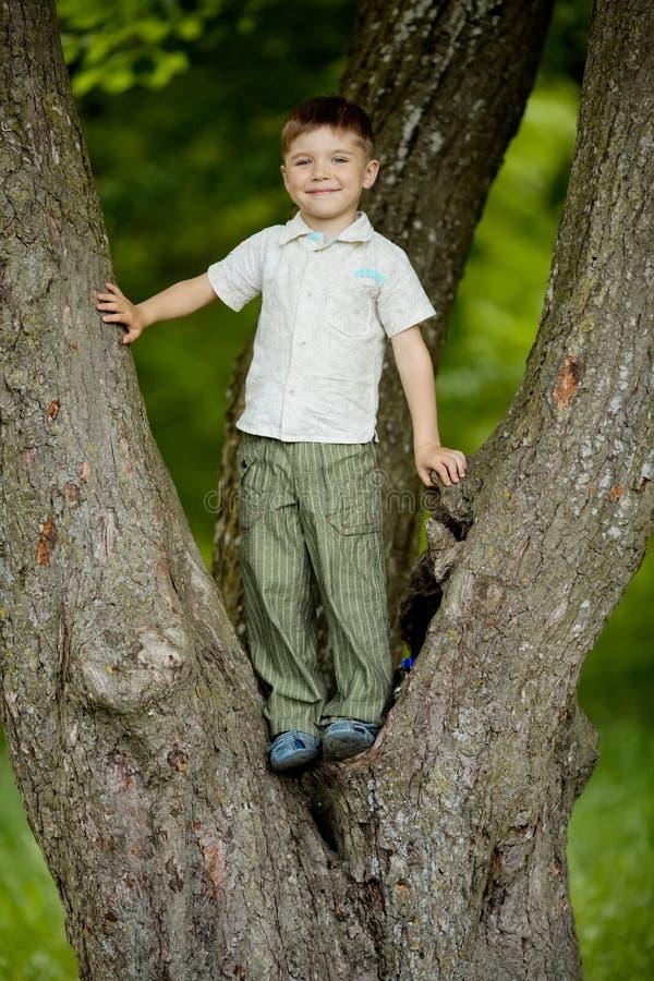 Boy climbs big tree in park stock photo