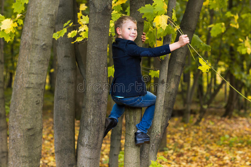 Boy climbs up the tree in autumn park stock image