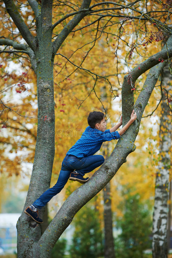 Boy climbs up the tree in park. Boy climbs up the tree in autumn park stock image