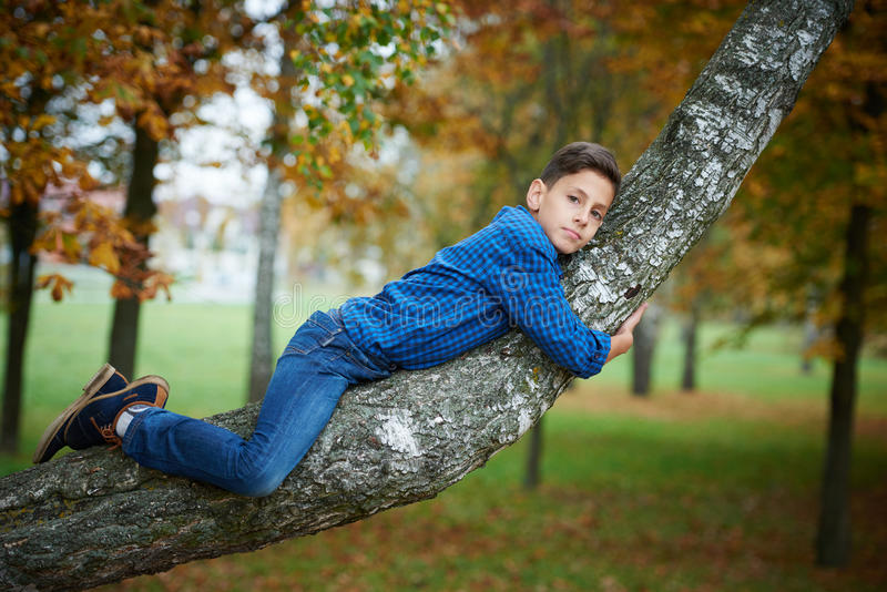 Boy climbs up the tree in park stock image