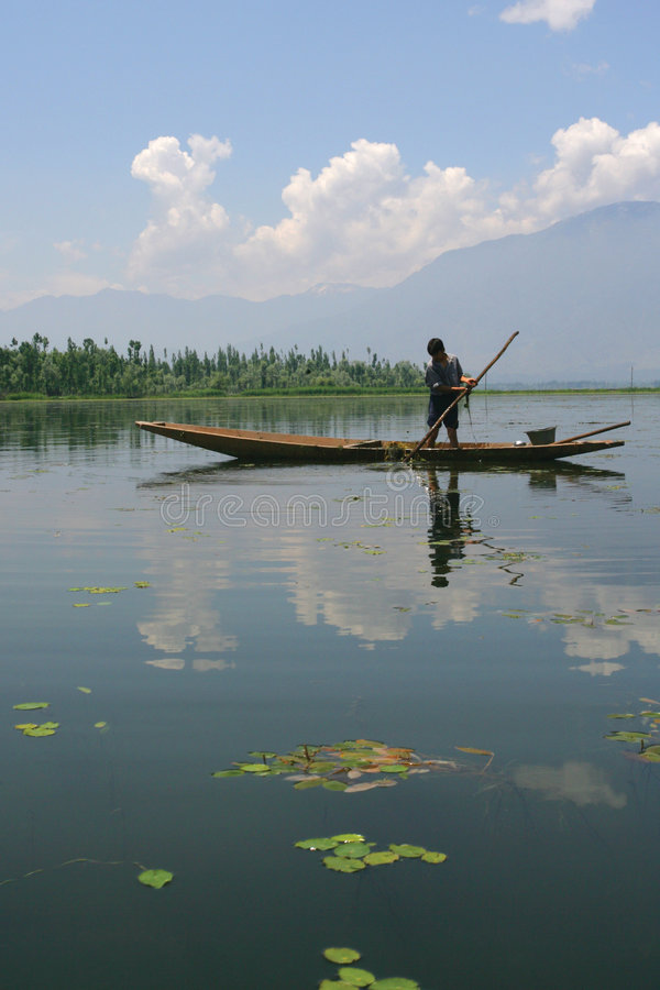 Boy collecting lake grass stock images