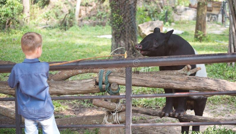 Boy in Contact Zoo stock photos