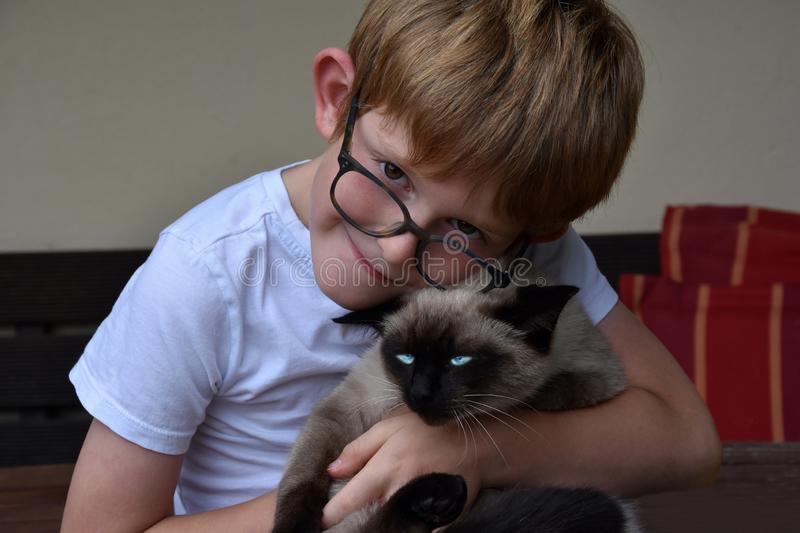 Boy cuddles his little cat. A ragdoll siamese mix with bright blue eyes royalty free stock image