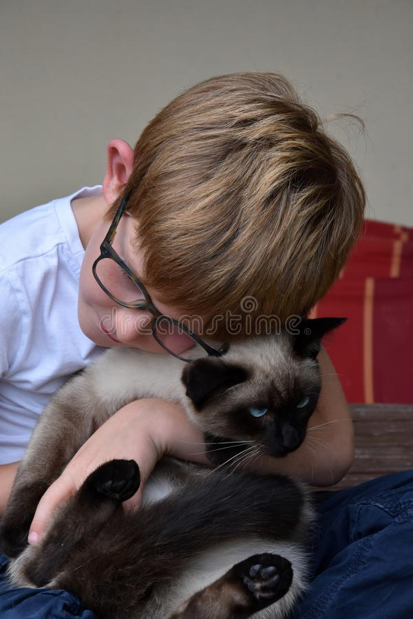 Boy cuddles his little cat. A ragdoll siamese mix with bright blue eyes royalty free stock images