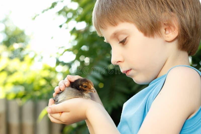 Boy cute hugs chiken in hand nature summer outdoor stock image