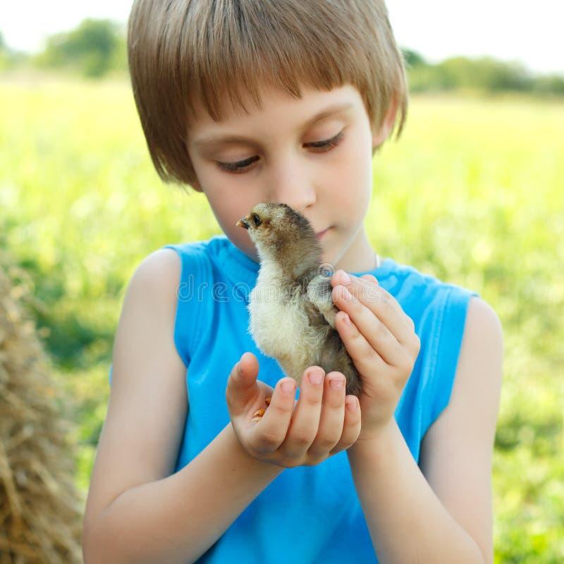 Boy cute hugs chiken in hand nature summer outdoor stock images