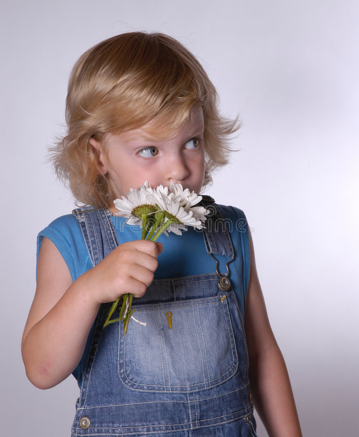 Boy with daisies royalty free stock photo