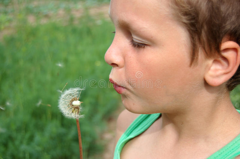 Download Boy and dandelion stock image. Image of hair, blowing - 10602579