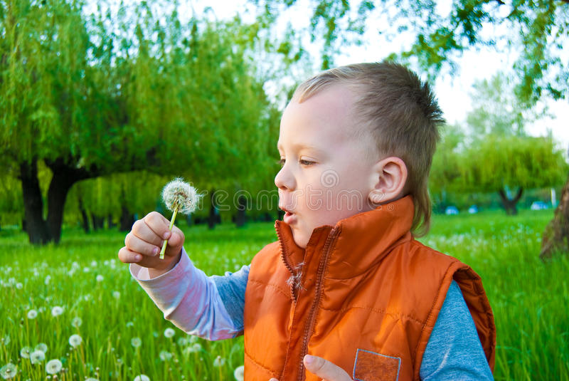 Download The boy with a dandelion stock image. Image of seed, grass - 12793111