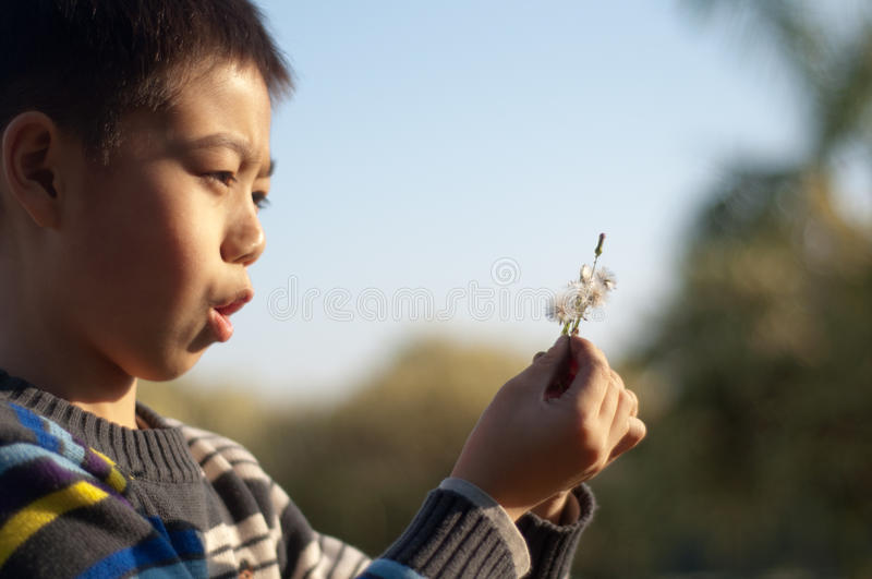 Download Boy with a dandelion stock photo. Image of kindergarden - 22314348