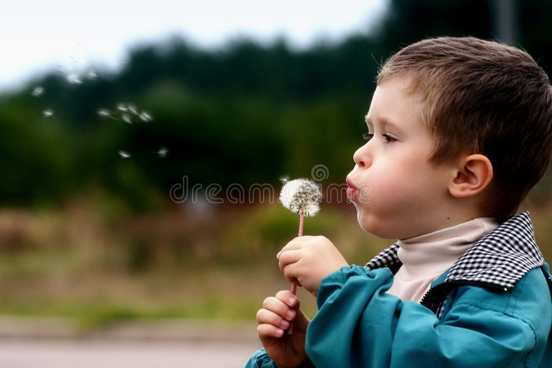 Boy with a dandelion stock image