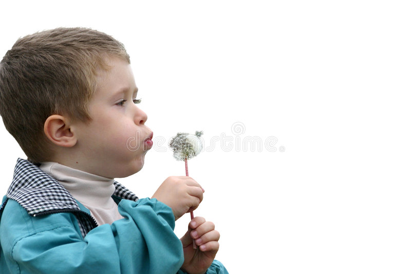 Boy with a dandelion stock photography