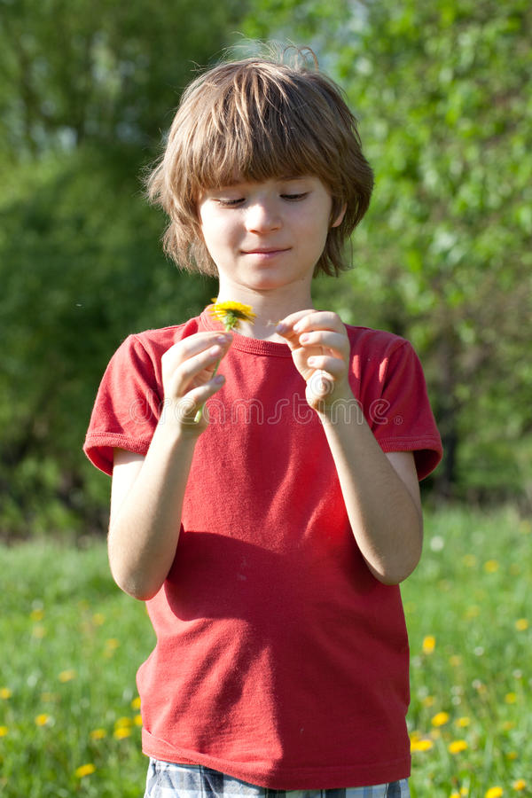 Boy with dandelion in the hands of stock photography