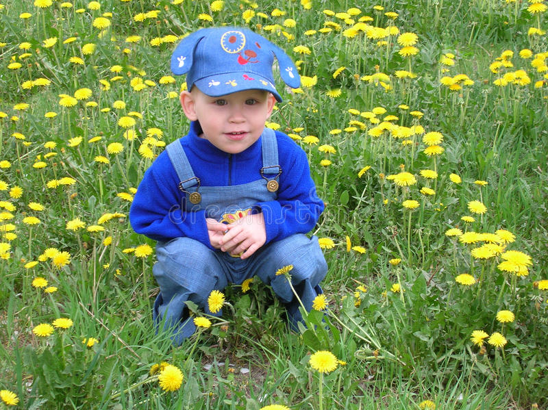 The boy and the dandelions stock images