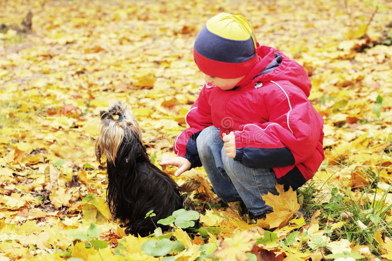 Download Boy and dog stock image. Image of autumn, focus, soft - 7643689