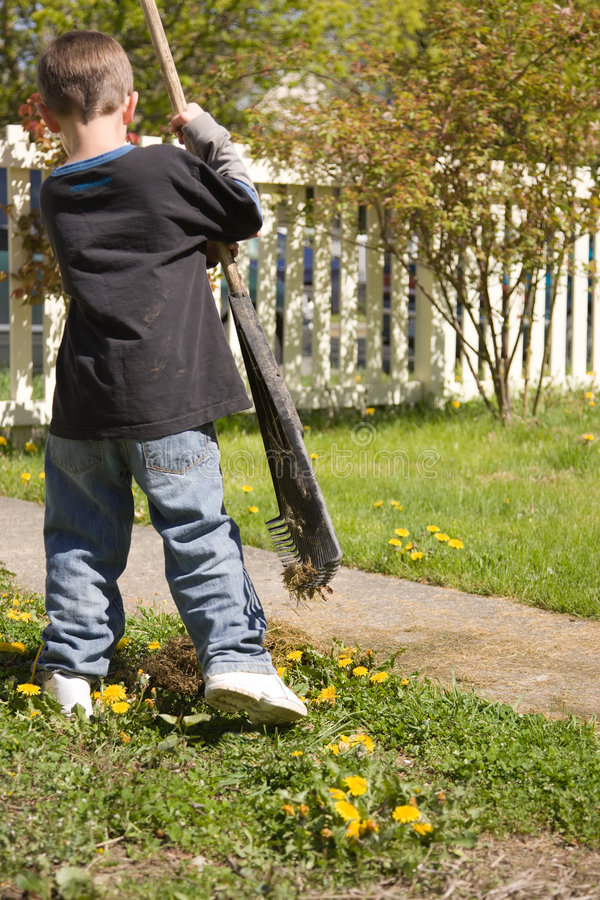 Boy doing yardwork stock images