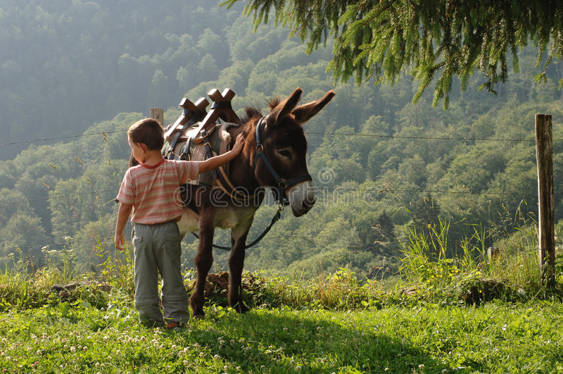 Boy with donkey. Little boy with donkey, Vosges Mountains, Alsace, France stock photography