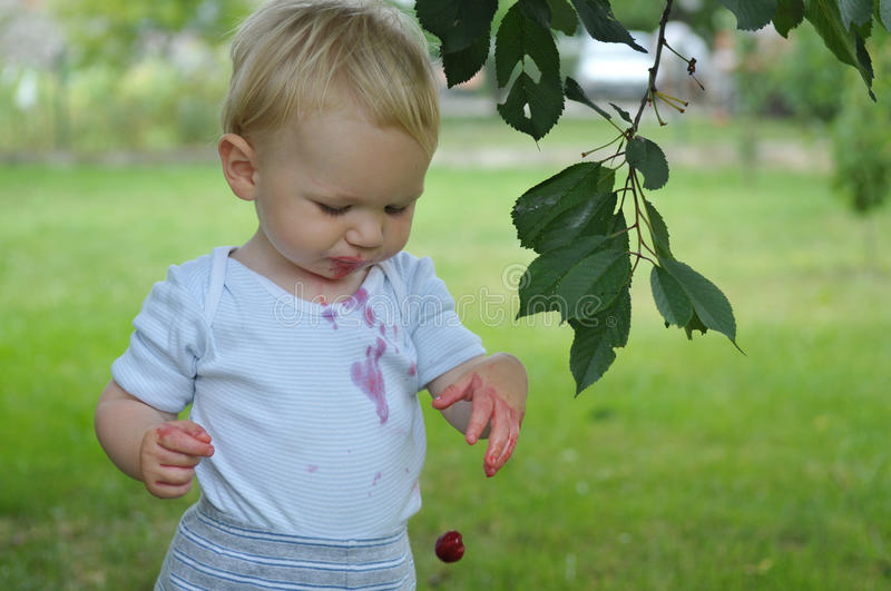 Boy eating cherries stock images