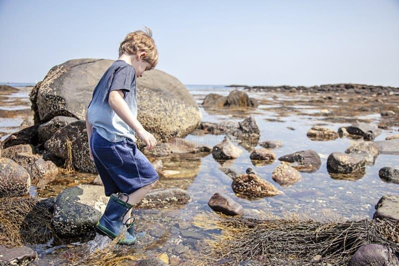 Boy exploring tide pools on New Hampshire coast stock images
