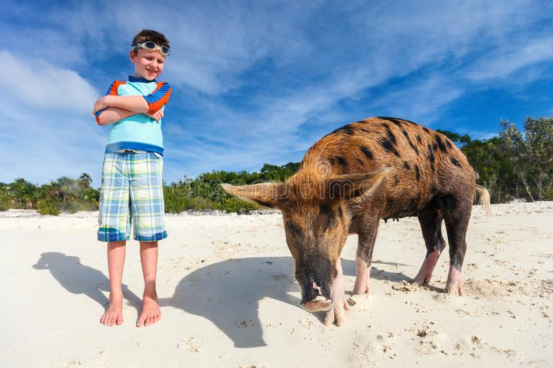 Boy on Exuma vacation. Boy with swimming pig of Exuma at beach stock photos