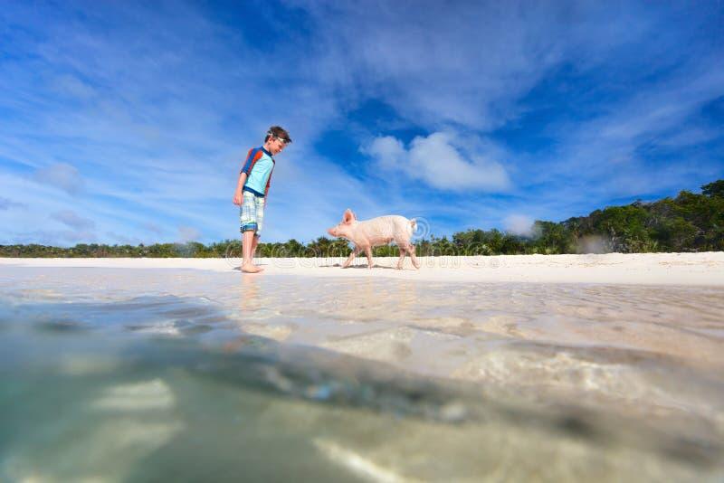 Boy on Exuma vacation. Boy with little piglet at Exuma beach, Bahamas royalty free stock image