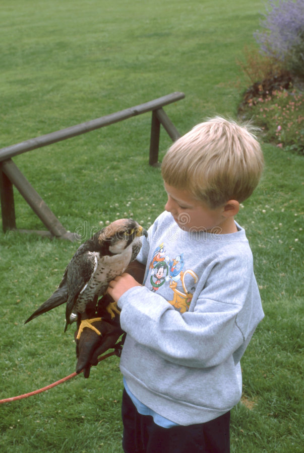 Download Boy with Falcon stock image. Image of bird, child, pets - 1678987