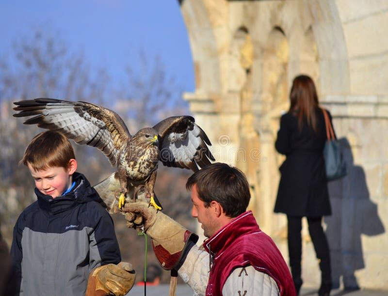 Boy falcon falconer Budapest stock photography