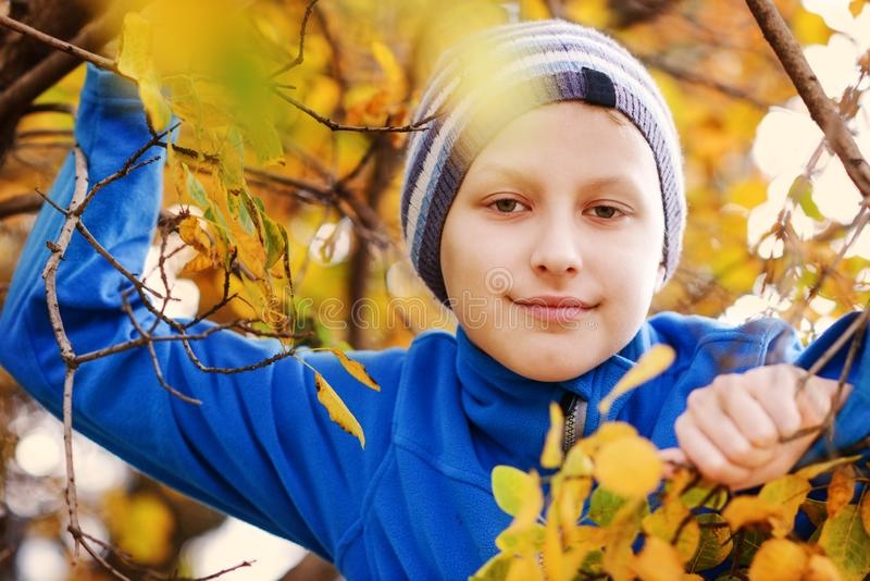 Boy in fall royalty free stock photography