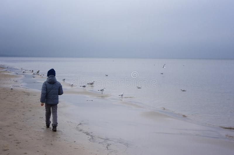 Boy feeding gulls on the beach. Little boy stands on beach the sea on cold windy day royalty free stock images