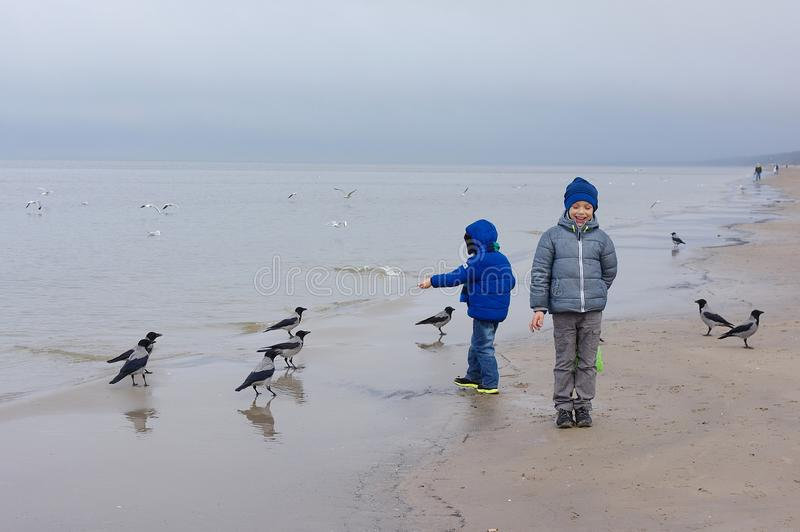 Boy feeding gulls on the beach. Little boy stands on beach the sea on cold windy day royalty free stock photography