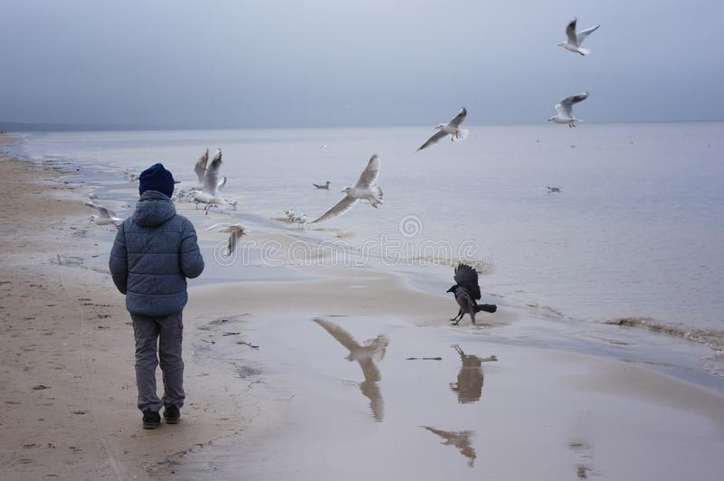 Boy feeding gulls on the beach. Little boy stands on beach the sea on cold windy day royalty free stock image
