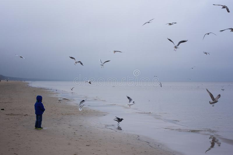 Boy feeding gulls on the beach. Little boy stands on beach the sea on cold windy day stock photography