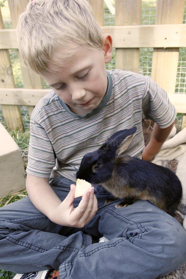 Boy feeding his pet rabbit royalty free stock photos