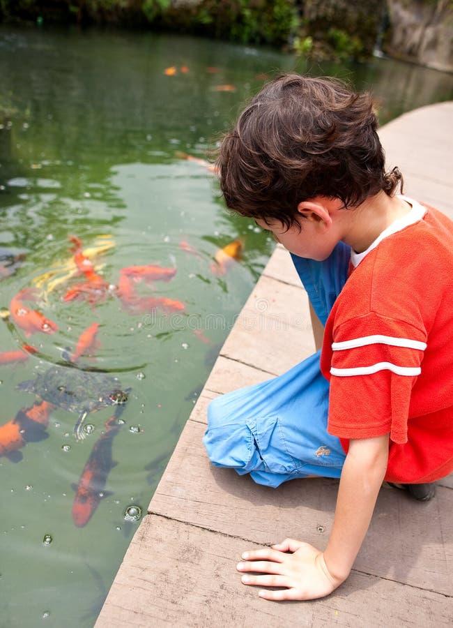 Boy feeding Japanese koi fish in tropical pond. Young boy feeding Japanese koi fish in tropical pond stock photos