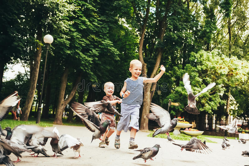 Boy feeding pigeons birds in park royalty free stock photography