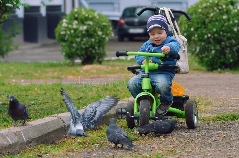 Boy feeding the pigeons with bread . stock images