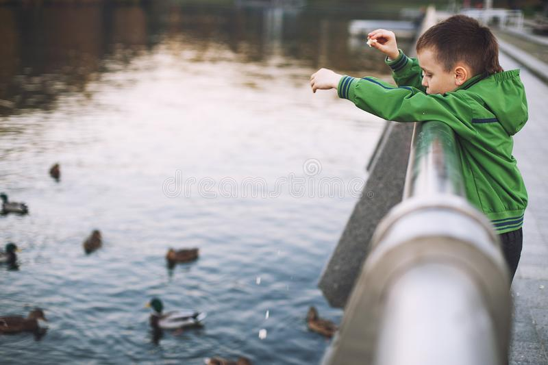 The boy feeds the ducks stock image