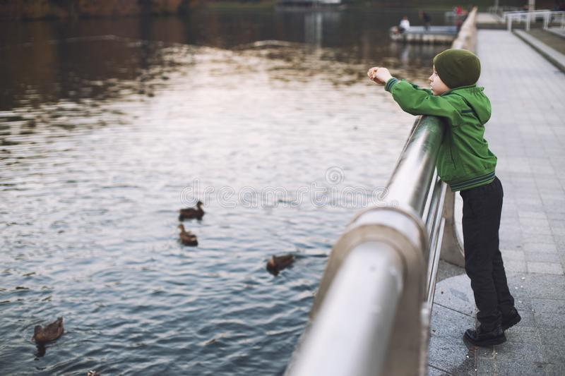 The boy feeds the ducks royalty free stock photography