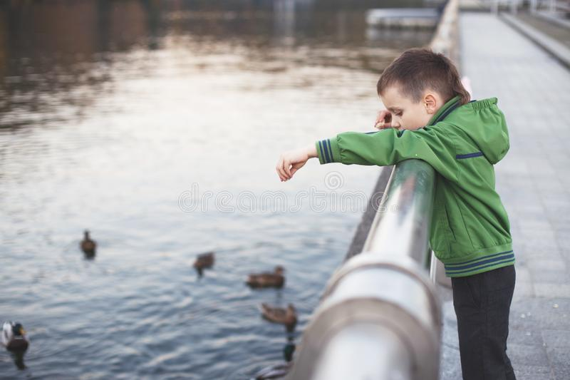 The boy feeds the ducks royalty free stock photo
