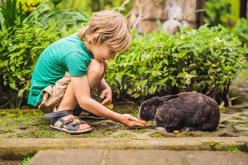 The boy feeds the rabbit. Cosmetics test on rabbit animal. Cruelty free and stop animal abuse concept.  stock photo