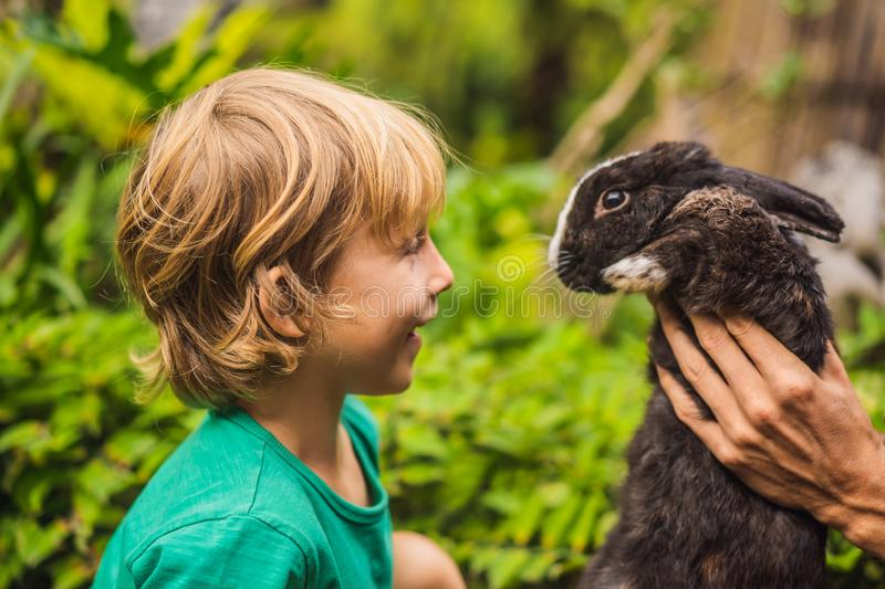 The boy feeds the rabbit. Cosmetics test on rabbit animal. Cruelty free and stop animal abuse concept.  stock photography