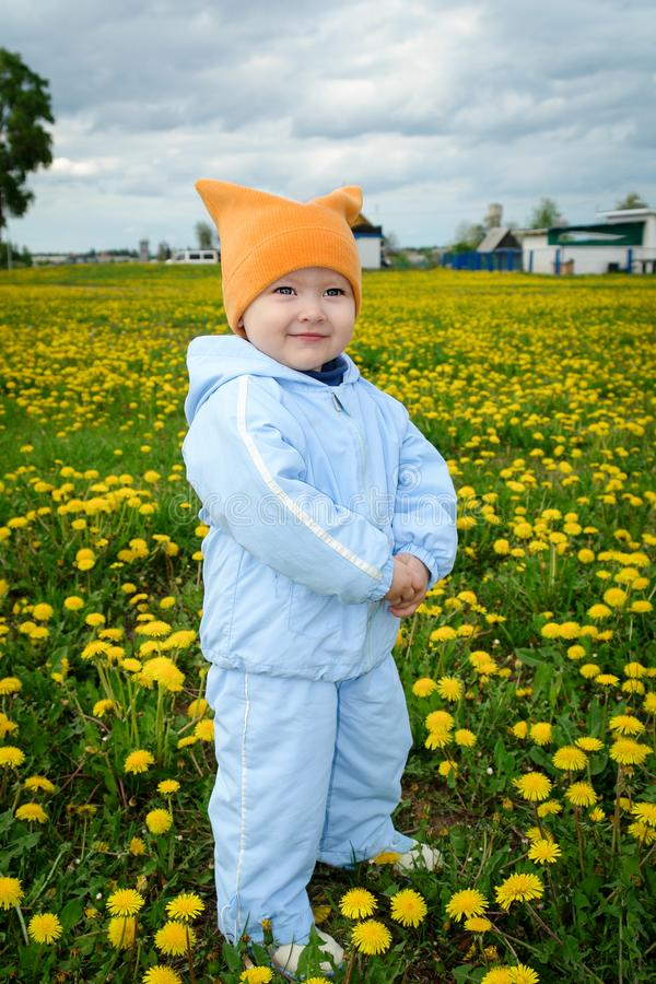 Boy on the field with dandelions stock photos