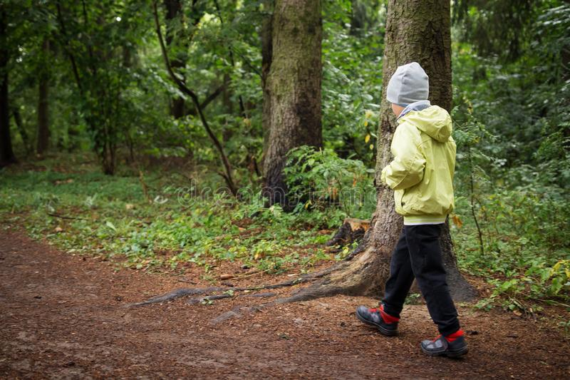 Boy in forest stock photos