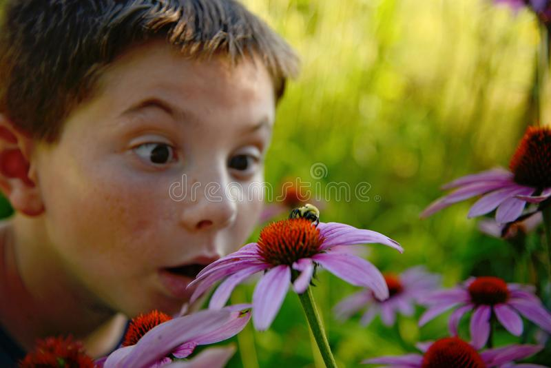 Boy in garden with bee. Portrait of young boy in sunny garden staring at bee on flower stock images