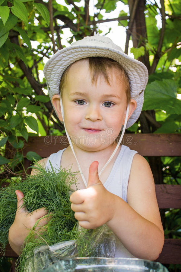 Boy in the garden. Little smiling boy in the garden with dill stock photography