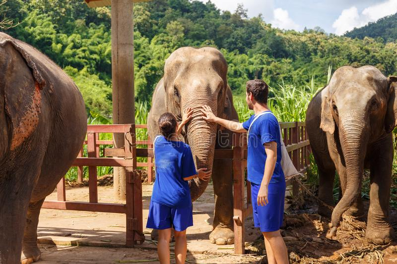 A boy and a girl caress an elephant at sanctuary in Chiang Mai T stock photos